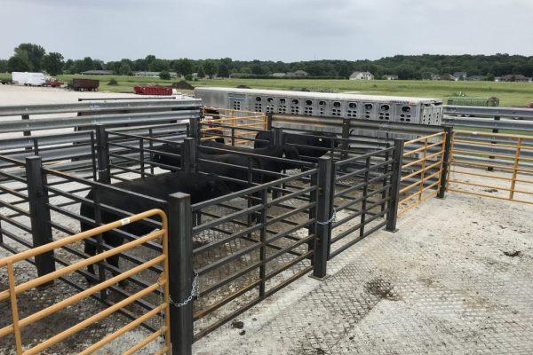 bovine veterinarian