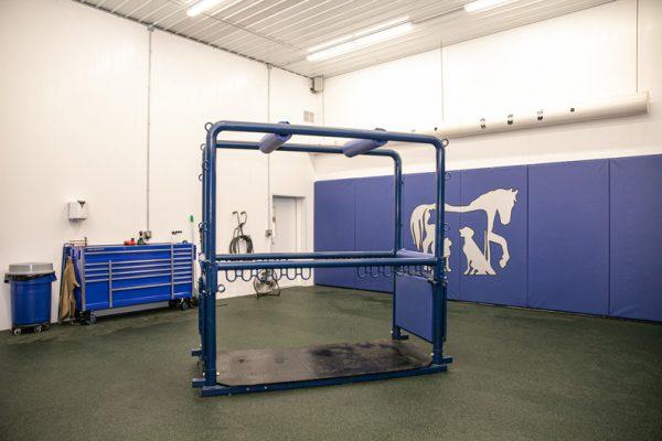 Equine Treatment Area