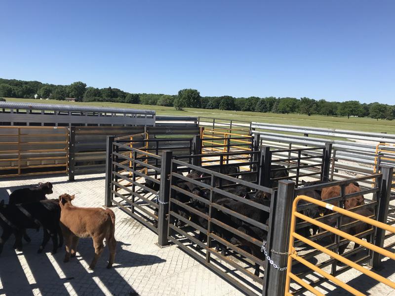 Farm animal veterinarian in Humboldt, IA